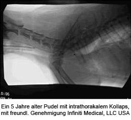 Trachealkollaps und Larynxparalyse des Hundes