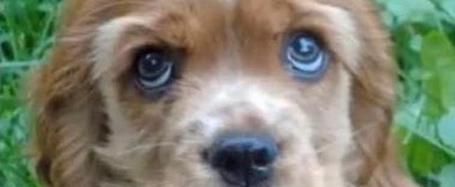 Wie gesund ist Ihr Hund wirklich?